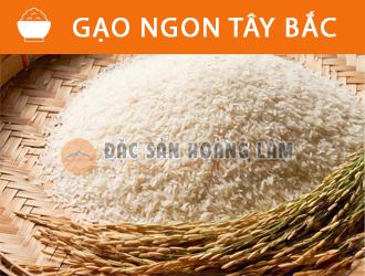 banner-gaongontaybac