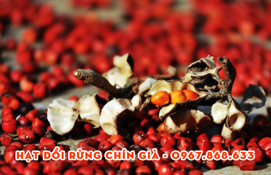 hat doi rung tuoi - 100g Hạt dổi rừng