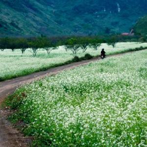 cao nguyen moc chau 300x300 - Ấn tượng du lịch Sơn La