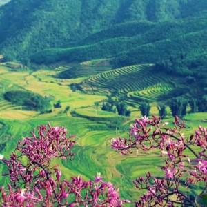 du lich dien bien 300x300 - Những món rau rừng đỉnh nhất vùng Tây Bắc