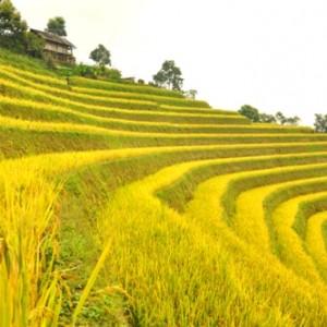 mu cang chai 300x300 - Ấn tượng du lịch Sơn La