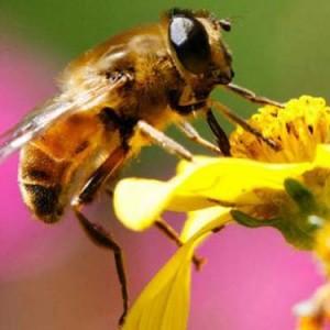 mua mat ong rung 300x300 - 10 món ăn đặc sản Tây Bắc bạn không nên bỏ qua mỗi lần đi phượt
