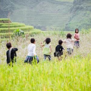 nac thang len cung troi 300x300 - Du lịch thăm lúa vùng Tây Bắc