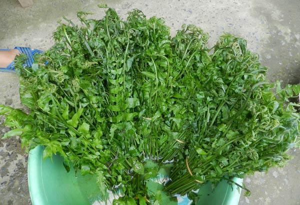 rau rung tay bac 2 - Những món rau rừng đỉnh nhất vùng Tây Bắc