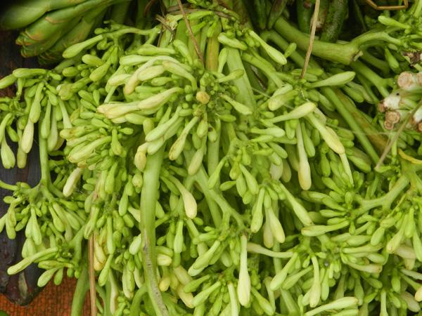 rau rung tay bac 3 - Những món rau rừng đỉnh nhất vùng Tây Bắc